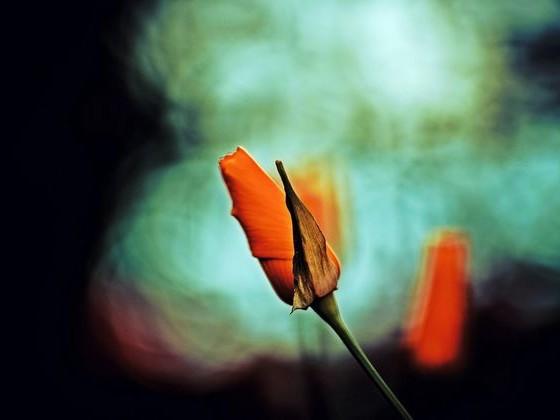 Kwiaty obiektywem malowane cz. 2