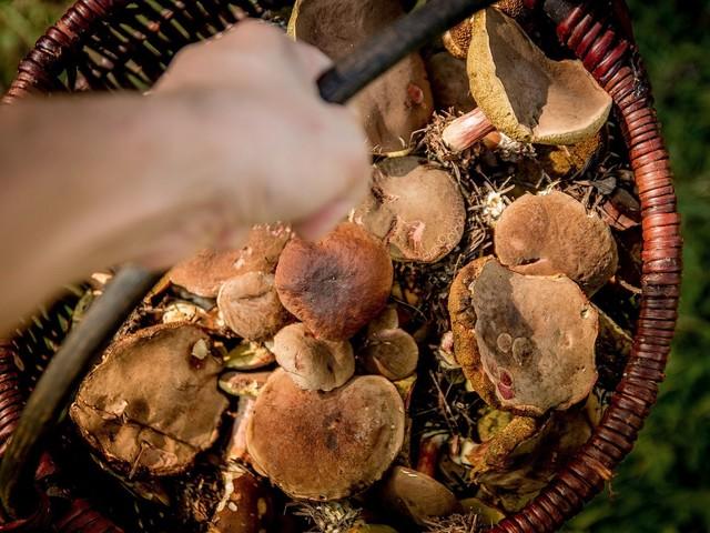 Śląskie. Zbyt mocno zaangażował się w szukanie grzybów, interwencja policjantów i strażaków
