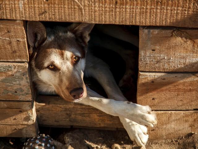 Pies rolnika cię pogryzł? Sąd Najwyższy wydał ważne stanowisko ws. odszkodowań