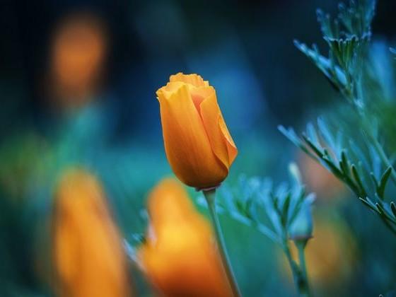 Kwiaty obiektywem malowane