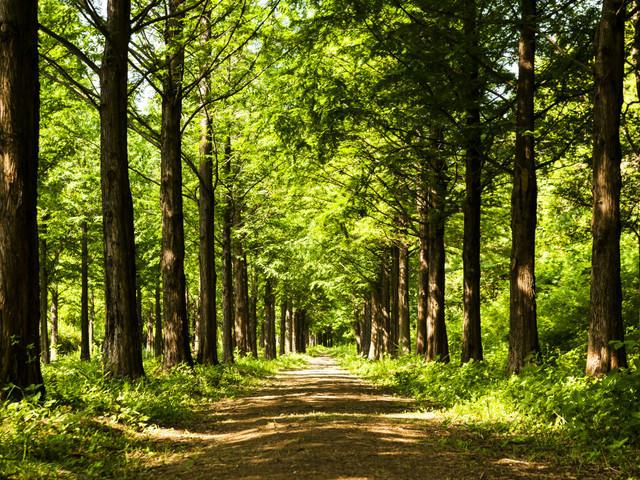 Kara za złamanie zakazu wstępu do lasu. Uważaj, bo teraz będzie on częściej obowiązywał