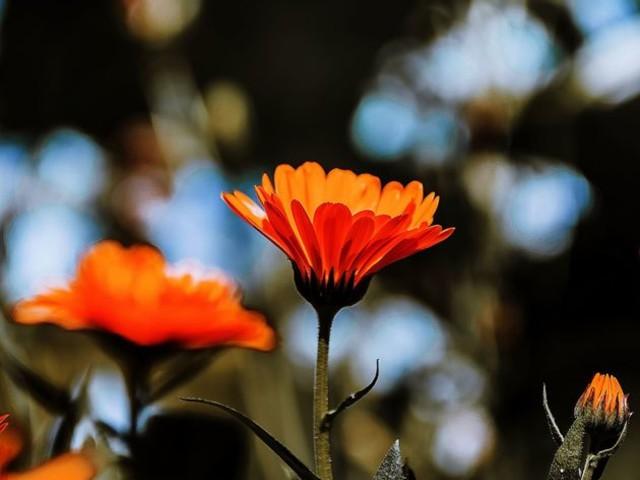 Kwiaty starym obiektywem malowane