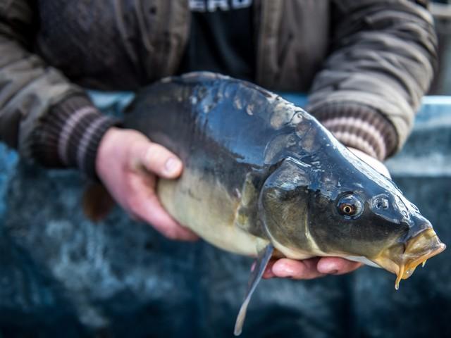 Jak kupować ryby, żeby się nie naciąć? Rady, które przydadzą się przed świętami