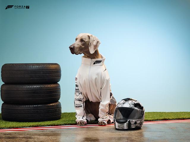 Microsoft firar hundens år med spelhundar