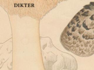 """Bengt af Klintberg """"Blek taggsvamp"""""""