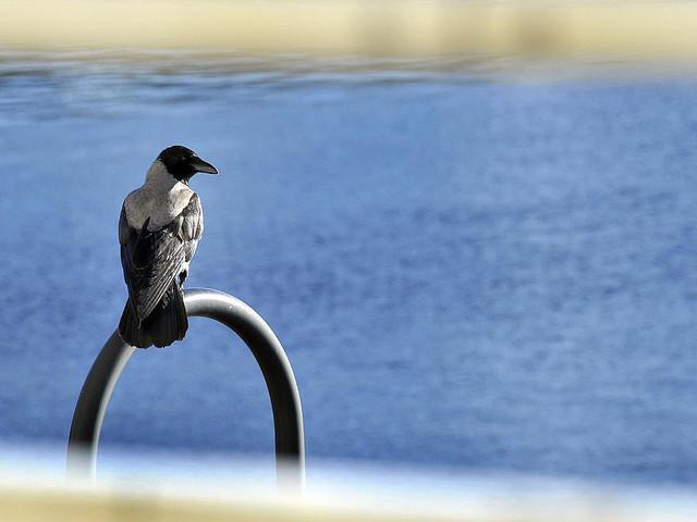 Fåglar skjutna med pilar i Höganäs