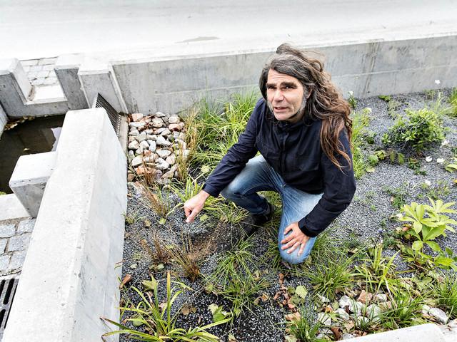 Neptunigatan återinvigd med 200 träd och biofilter