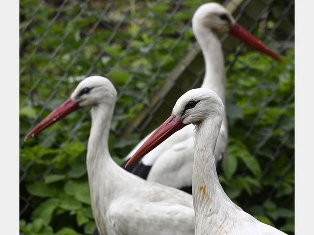 Stork får ta färjan hem till Skåne