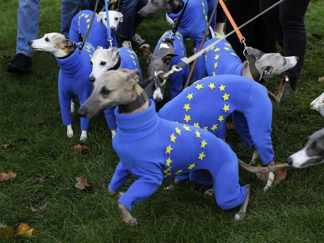 Oförändrad fart på euroekonomin