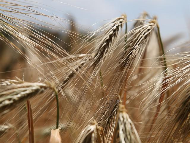 Gluten, kolhydrater och hunger