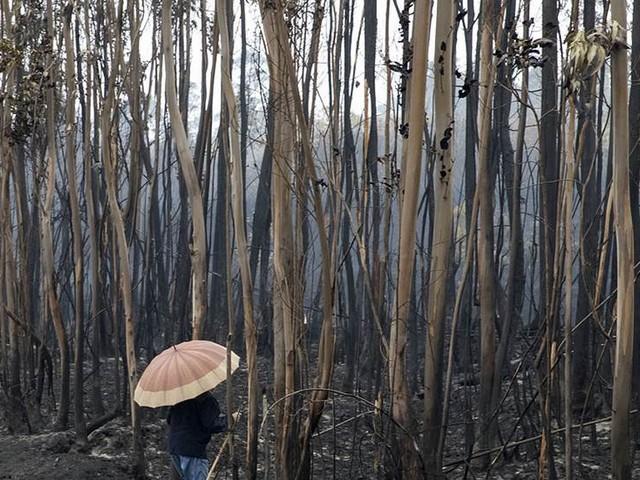 Minst 39 omkomna i skogsbränder