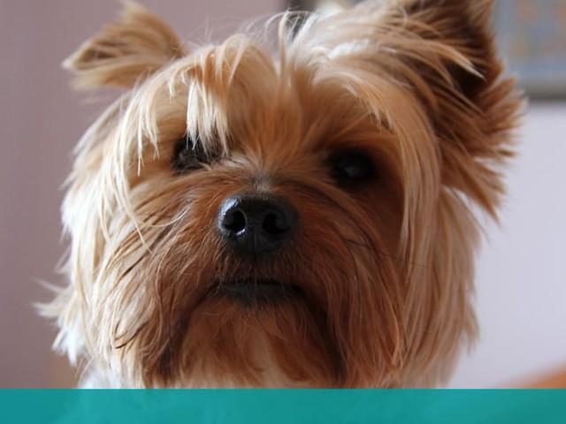 Skulle ta bort tandsten på hunden Ellie – drog ut 20 tänder