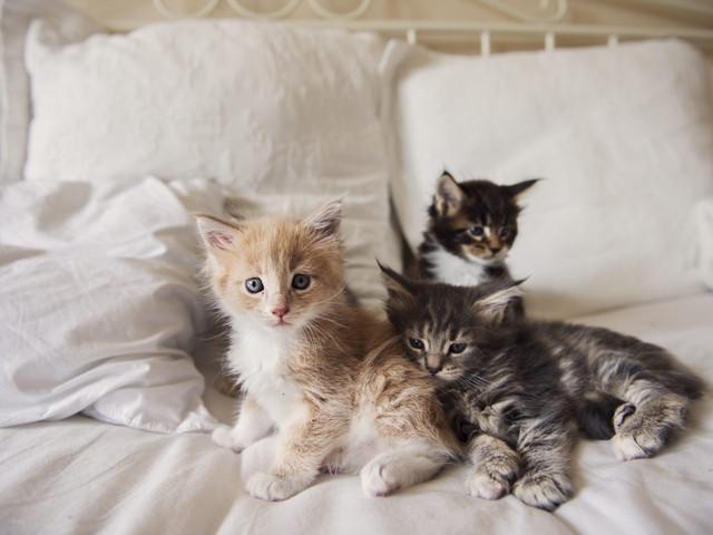 Stackars kattungar. Nu ska djuren rädda Miljöpartiet.