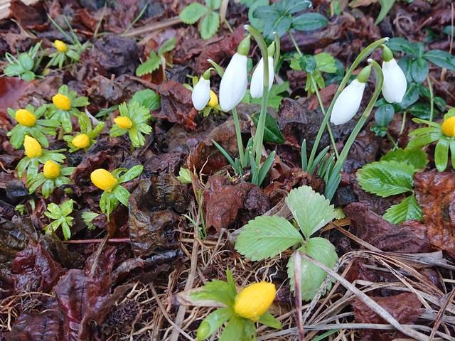 Våren har tjuvstartat – på fredag kan den börja på riktigt