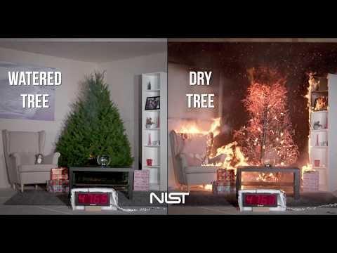Så snabbt brinner en uttorkad julgran