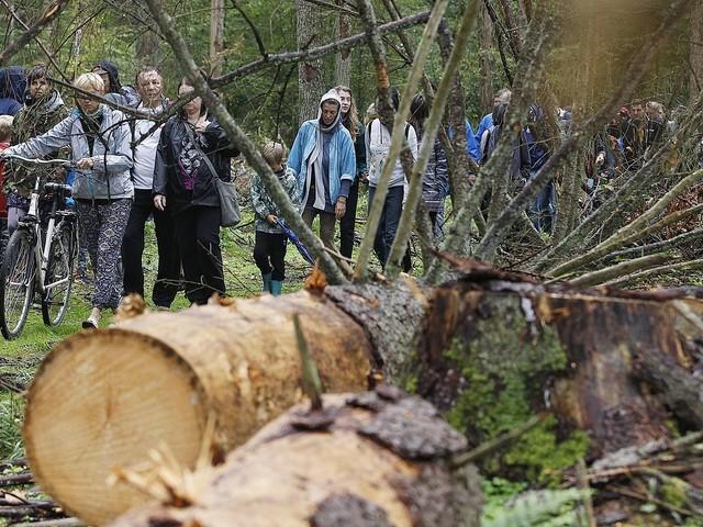 Polen lovar lyda EU om urskog