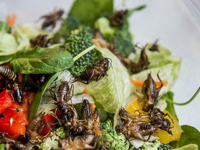 Öppning för insekter på tallriken