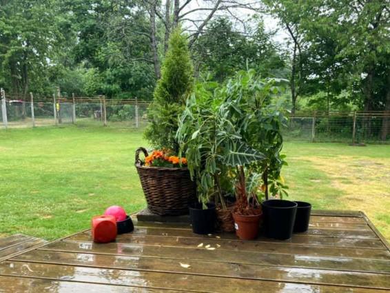 Äntligen fick man lite regn (och åska)!