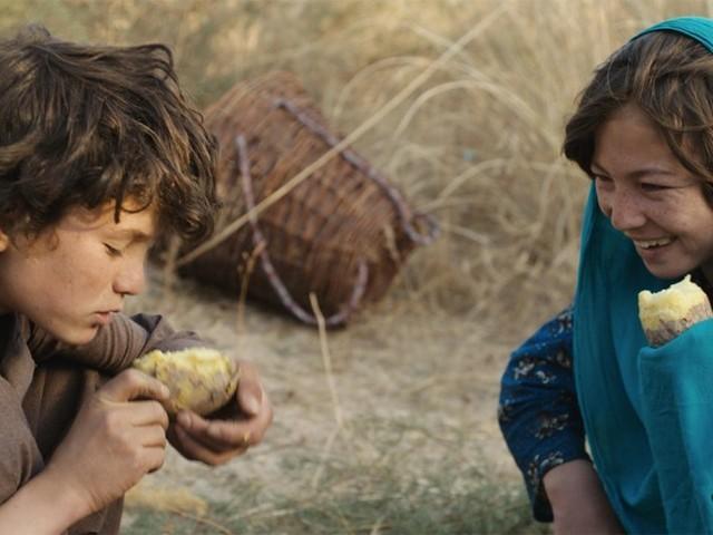 Wolf and sheep: Miljö vi sällan får se på film