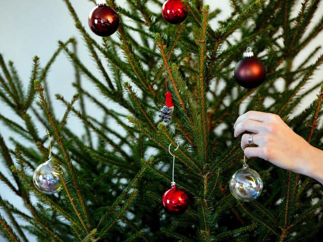 Tips: Så sköter du din julgran så den håller länge