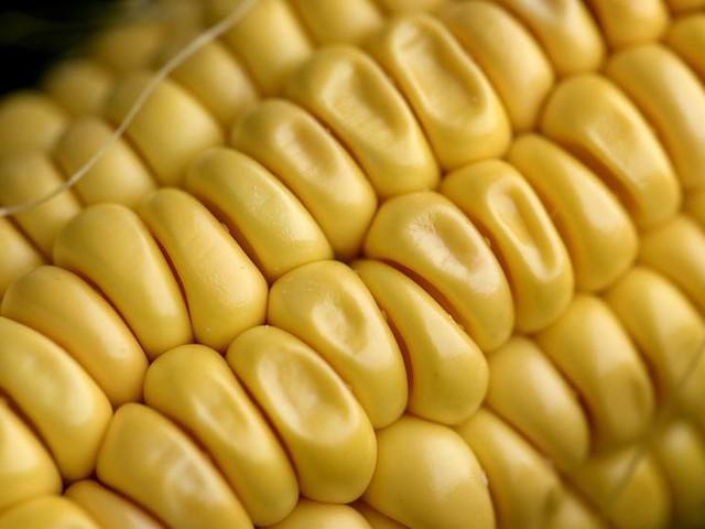 Återkallar majs efter listerialarm