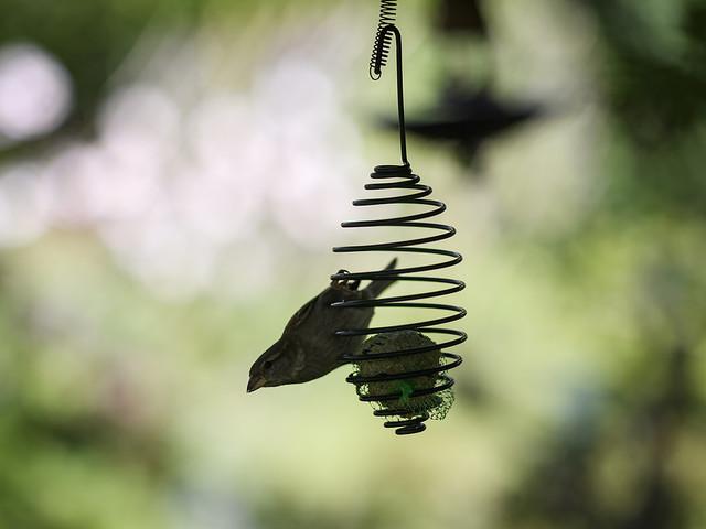 Forskning: Kraftig minskning av småfåglar