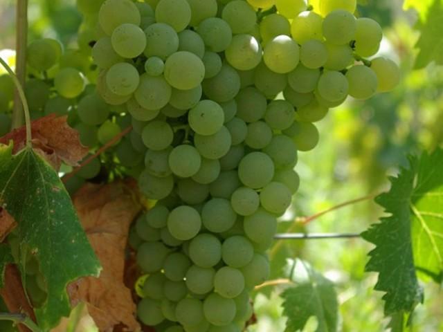 Vinmuseum med sardiska viner och försäljning i butik