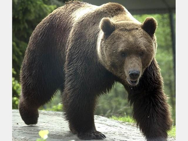 Björnar skjutna i nödvärn