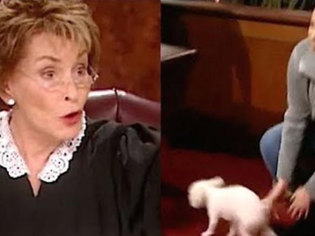 Judge Judy släpper lös en hund i rättssalen för att se vem ägaren är