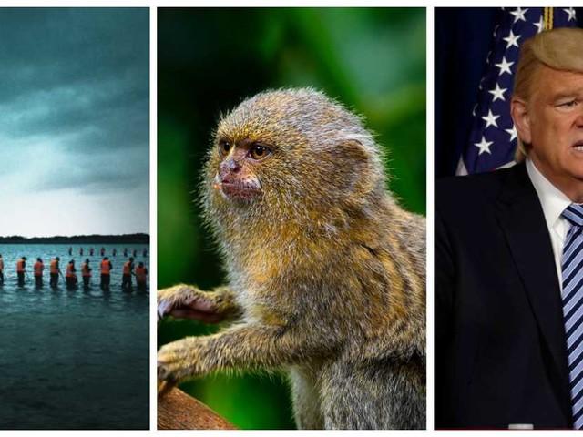 Charmiga smådjur och otäckt Trump-porträtt