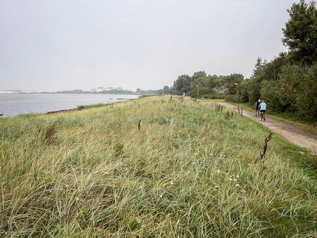 Mörkret, stjärnhimlen och fladdermössen ska skyddas i nya naturreservatet Öresundsparken