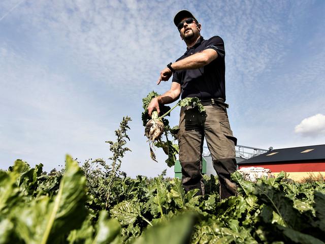 Rikliga skördar för skånska bönder