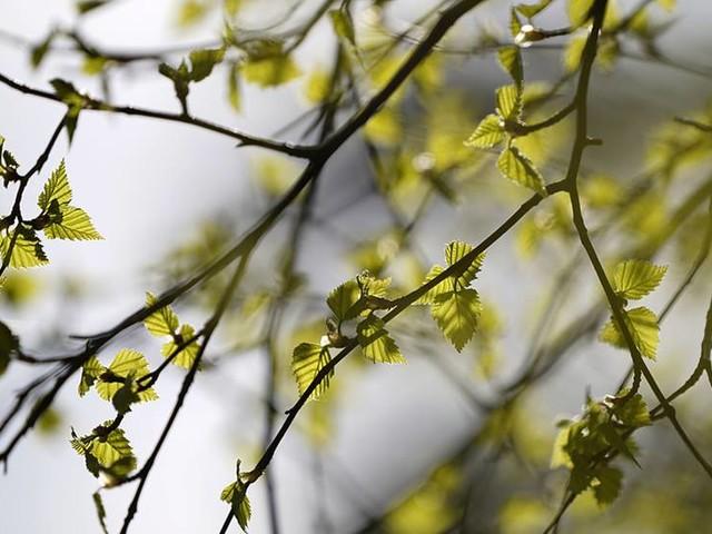 Tuff pollensäsong – så minskar du besvären