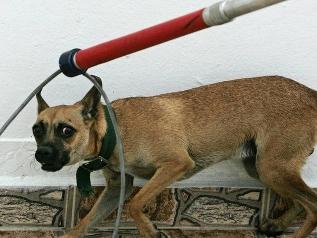 """Fler """"adopterar"""" hundar från utlandet"""
