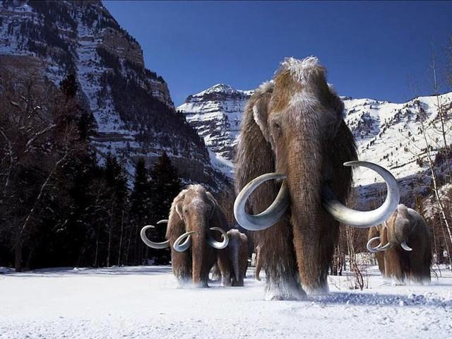 Mammutceller väckta till liv