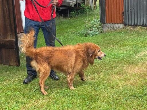 Just nu: Hunden Wille fastnade i stenröse – räddad efter tre timmar