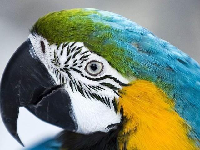 Brandmän undsatte papegoja i nöd