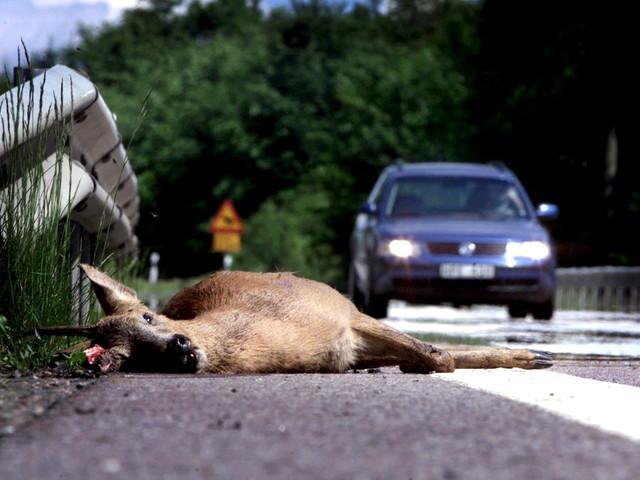 Sensorer vid vägkanten ska varna för vilt