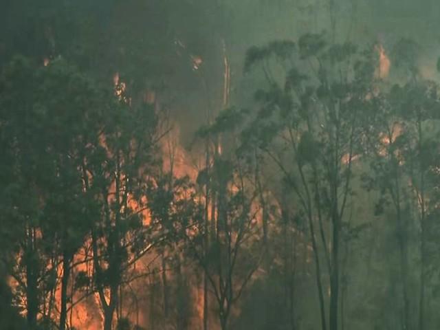 Fyra döda i australiska bränder