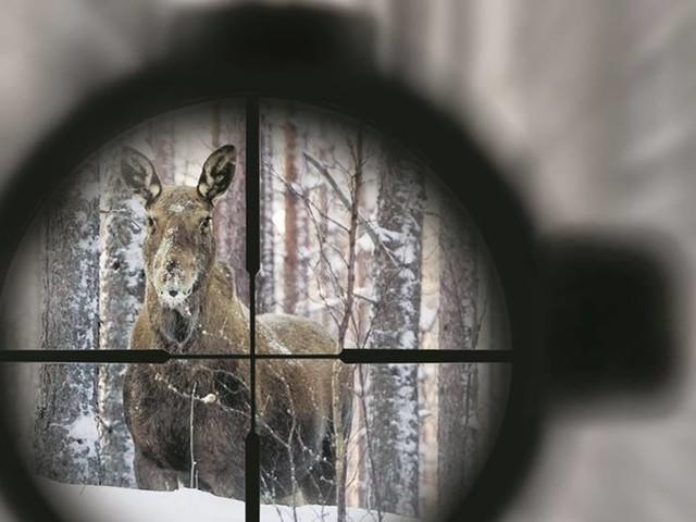 Jägaren rasar mot vinterjakten