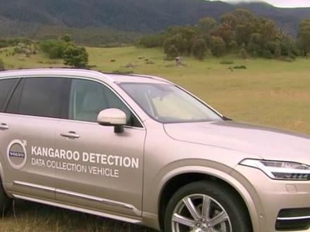 Volvo medger att deras bilar har svårt att upptäcka kängurur