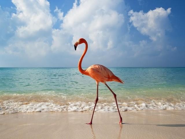 Finns det fler rosa flamingos?