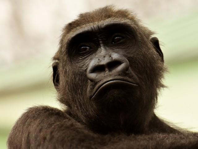 Gorilla Glass DX kan minska reflektionerna för klockskärmar med 75 procent
