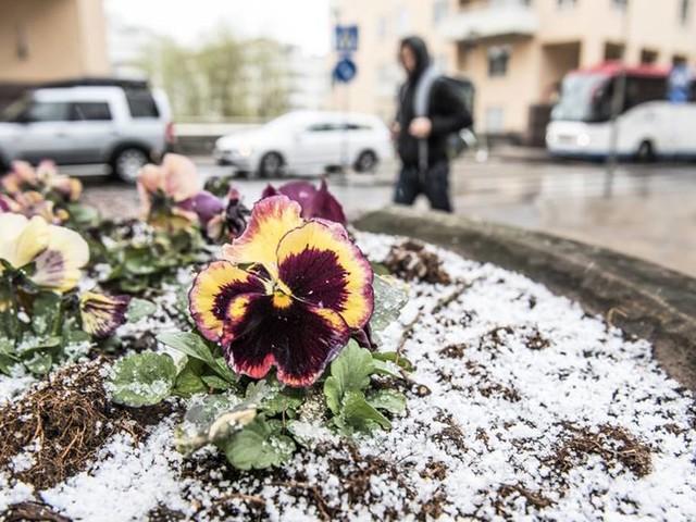 Snö, regn och blåst – men i helgen vänder det