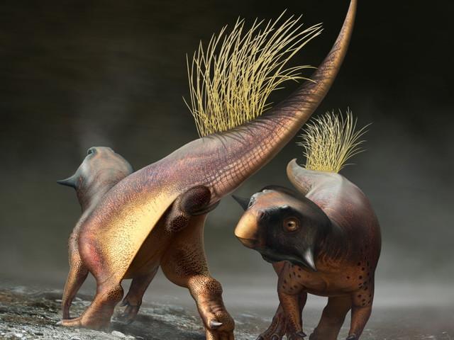 Dinosauriernas stjärthål nu äntligen beskrivet