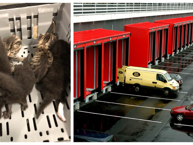 Hittades i back på Ica:s lager – nu söks kattungarnas mamma i hela södra Sverige