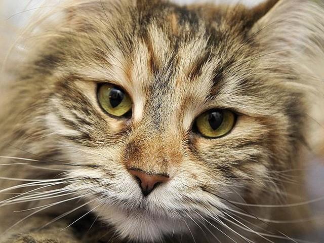 10000 i belöning för tips om dödad katt