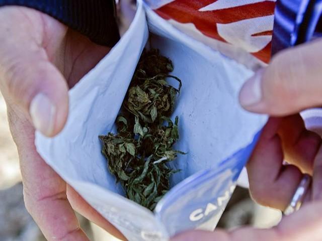 Grönt ljus för cannabis i senaten