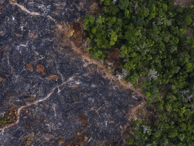Skövlingen av Amazonas slår nytt rekord