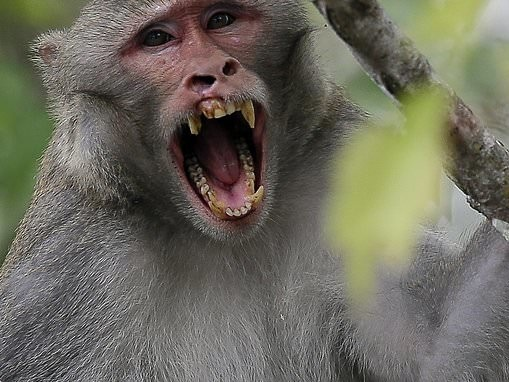 Monkeys that took over a Florida state park are carrying a rare and deadly form of herpes
